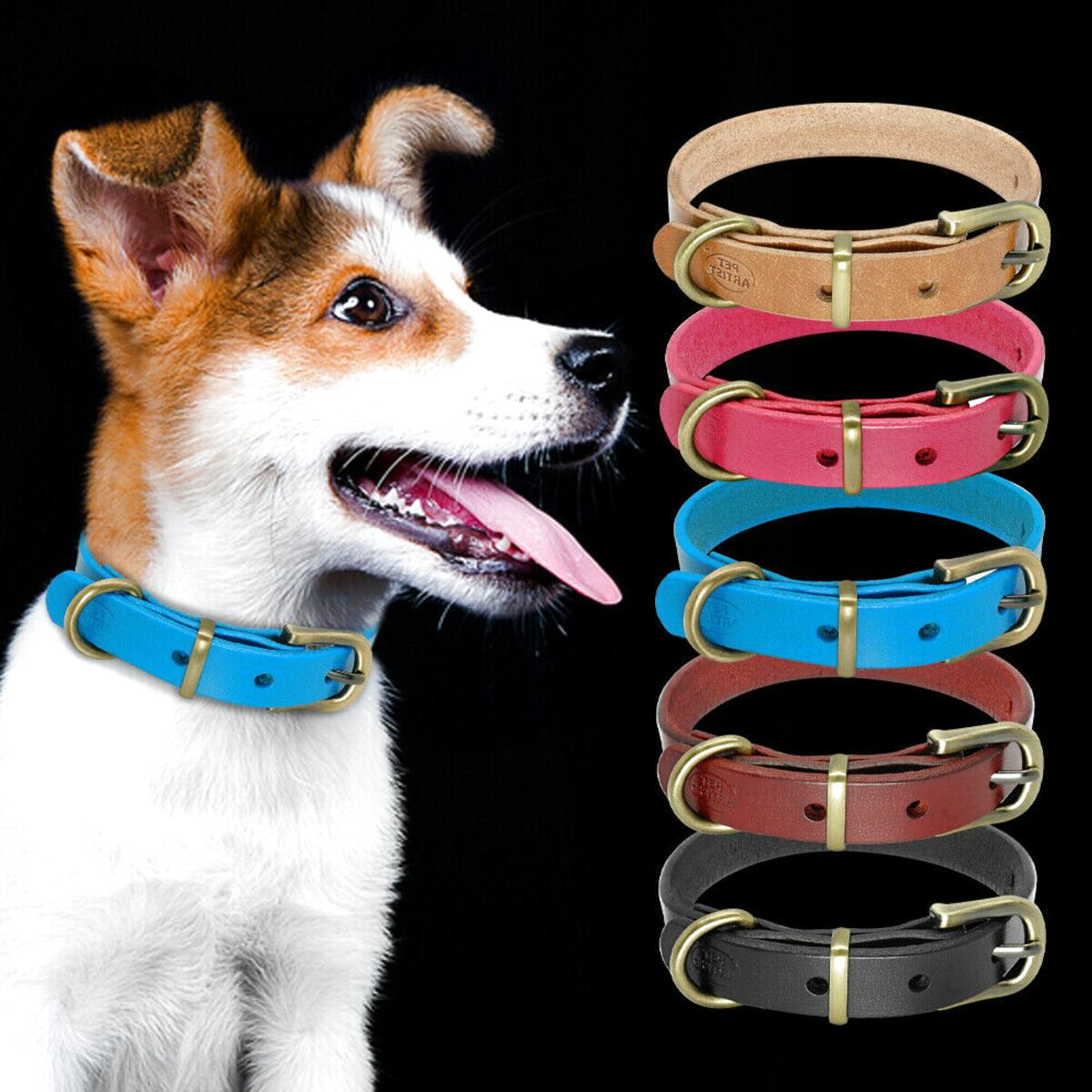 jack russell leather dog collar for sale