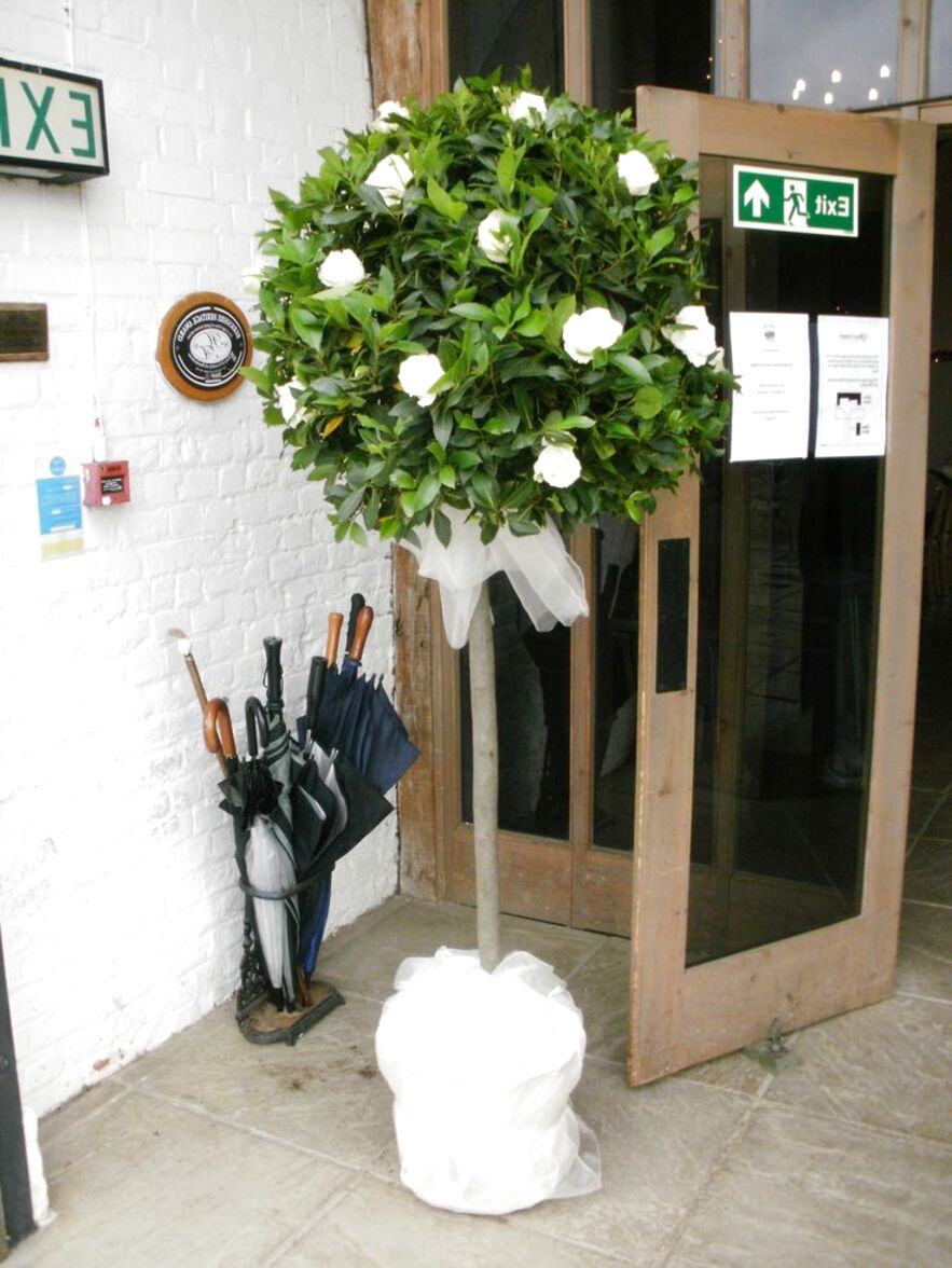 Wedding Topiary Trees For Sale In Uk View 48 Bargains