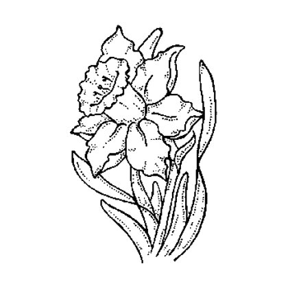 daffodil stamp for sale