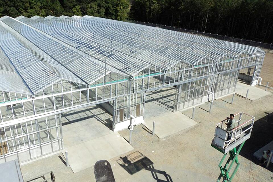 greenhouses glass for sale