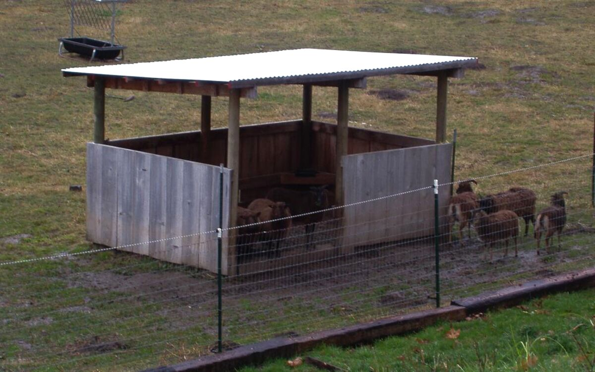 sheep shelter for sale
