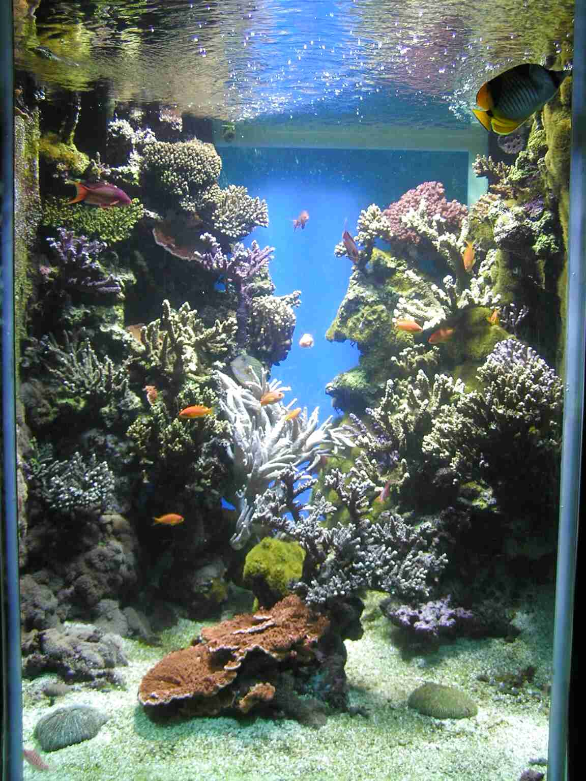Reef Tank for sale in UK | 64 second-hand Reef Tanks