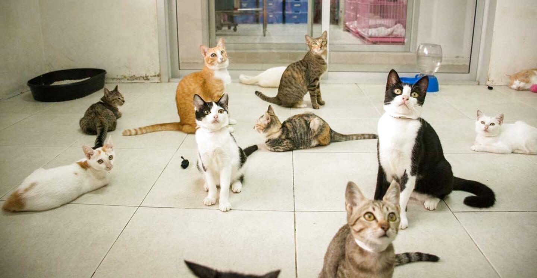 cat shelter for sale