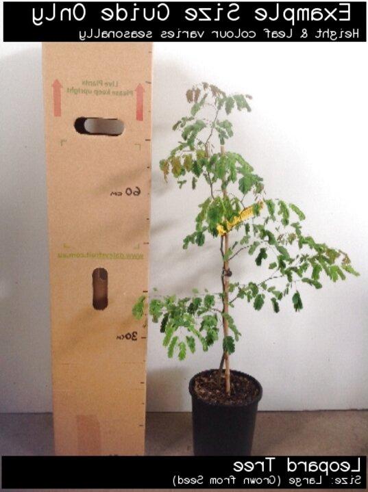saplings for sale