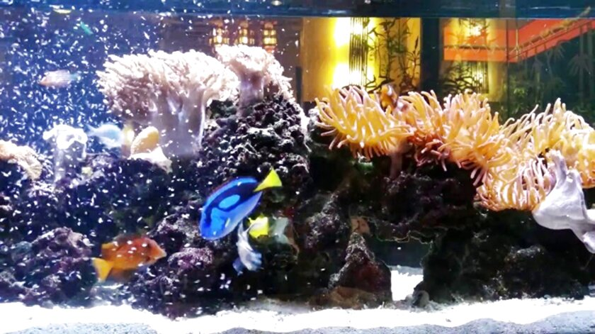 Marine Aquarium Setup for sale in UK | View 37 bargains