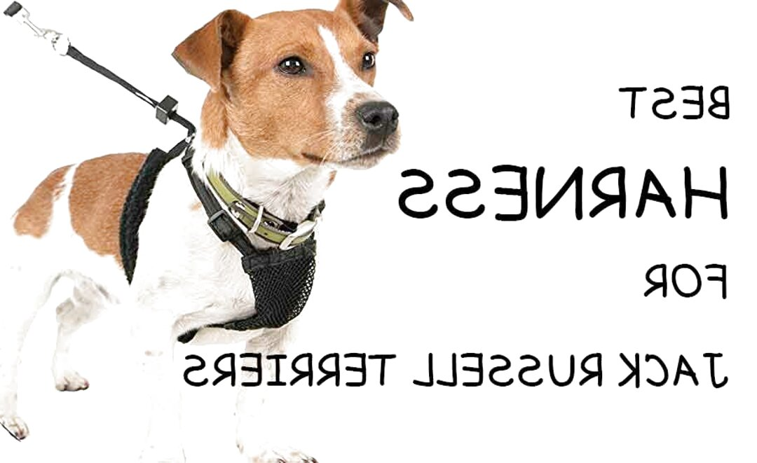 jack russell puppy harness for sale