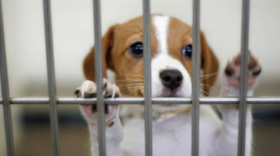 animal shelter for sale