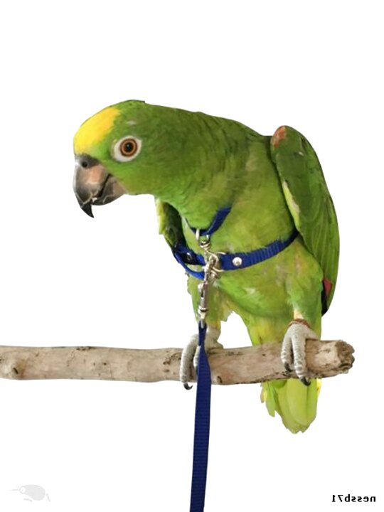 Pink Balacoo Bird Traction Rope Pet Parrot Harness and Leash Anti-Bite Flying Training Rope Pet Outdoor Traction for Macaw Large Size Bird