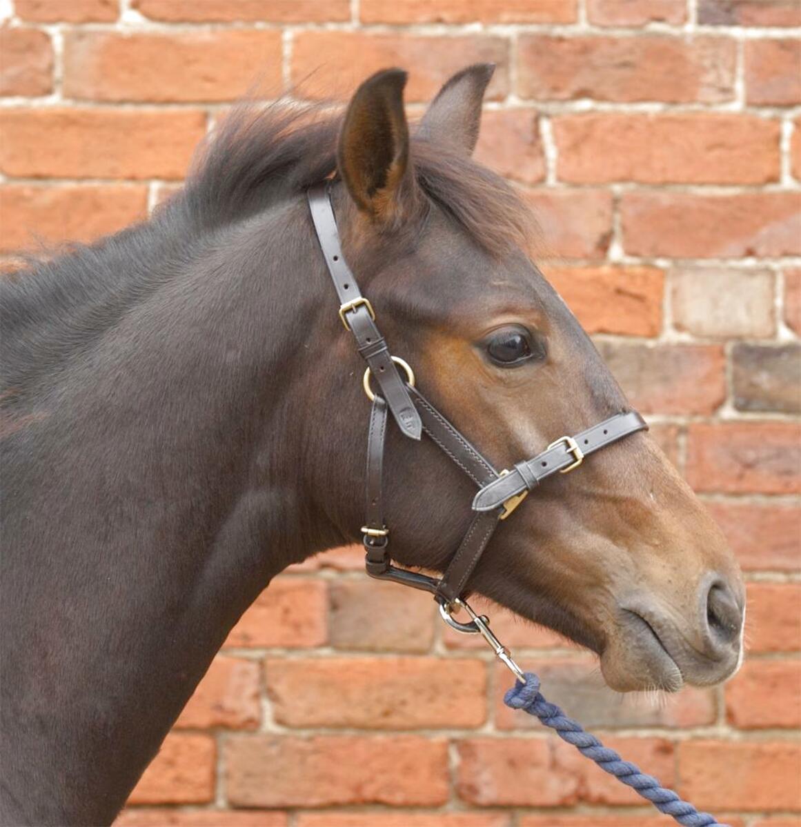 Rhinegold Adjustable Foal Miniture Pony Headcollar Head Collar AllColours Halter