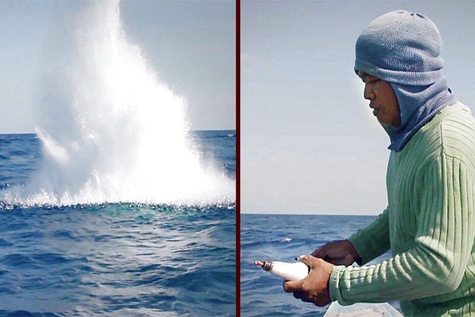 5 x 2.5 oz carp fishing bomb lead weights