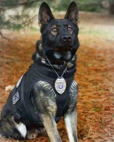 k9 for sale
