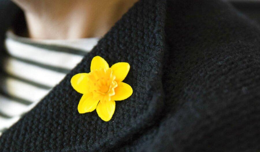 daffodil badge for sale
