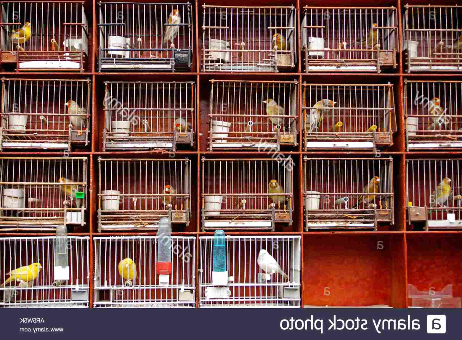 goldfinch cage for sale