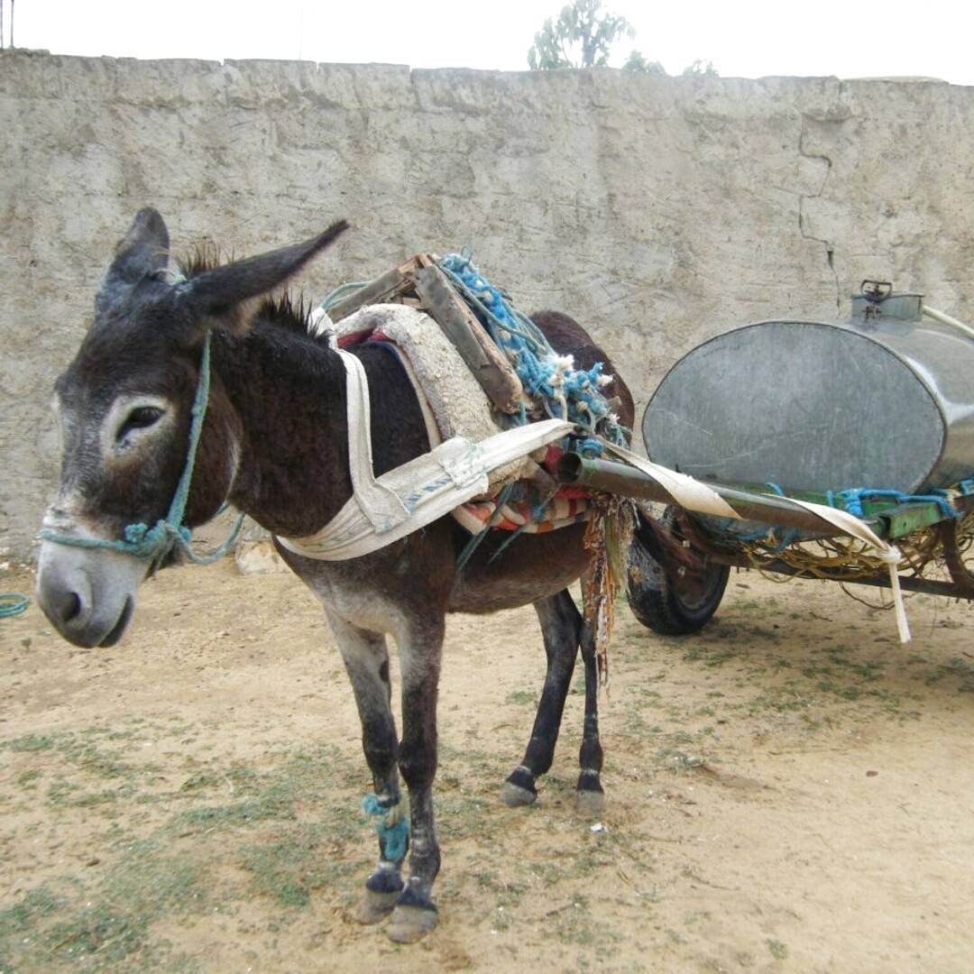 donkey carts for sale